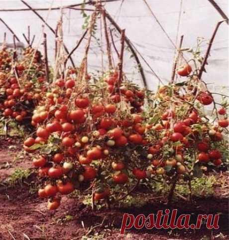 Чем и как подкармливать помидоры | ВО САДУ И В ОГОРОДЕ