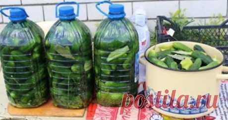Солим огурчики в пластиковых бутылках  В сезон консервации и каждая хозяйка, как обычно, запасается баночками, бутылями и закаточными крышечками для этого процесса. Но сегодня мы предложим вам кардинально новый метод консервирования огурц…