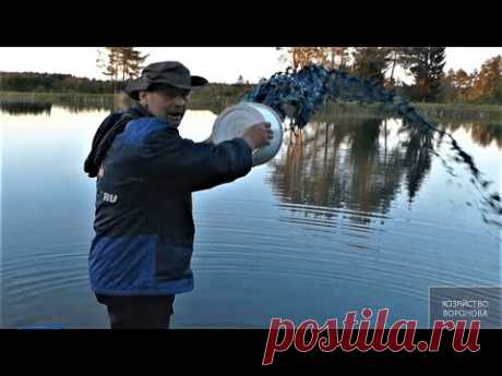 """Рабочий способ профилактики рыбы от """"краснухи"""" - YouTube"""