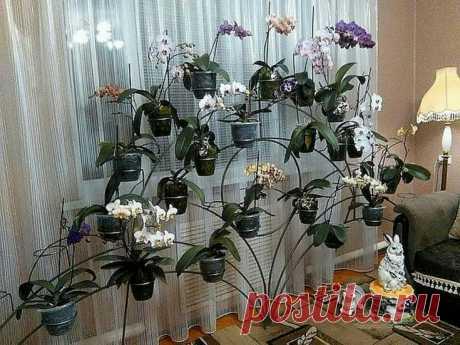 Идея выставки цветочных горшов Модная одежда и дизайн интерьера своими руками
