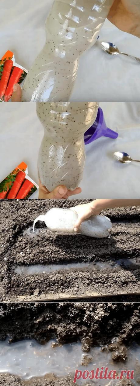 Хитрый способ посадки моркови без прореживания обеспечивающий хороший урожай — Бабушкины секреты
