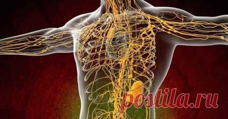 10 modos simples de la depuración del sistema linfático. ¡Solamente los medios naturales!