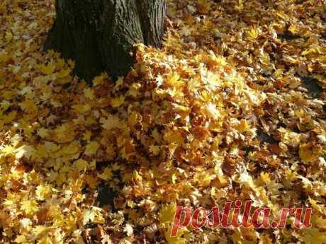 Укрывной материал для растений на зиму — 6 соток