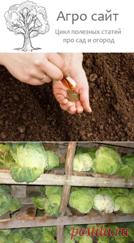 Октябрь: осенние работы в саду и огороде
