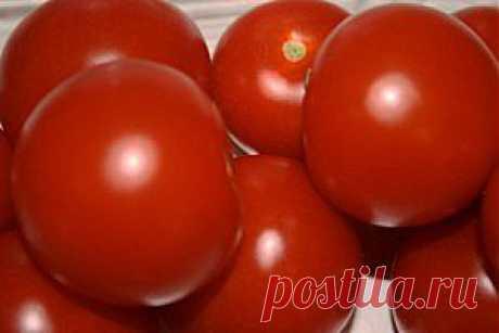 Las enfermedades y los saboteadores de los tomates.