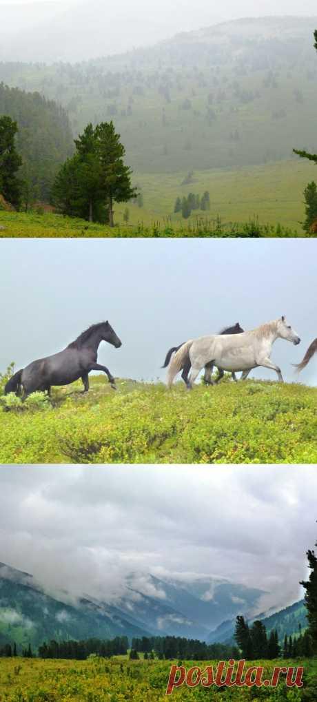 Горы туманные | Искусство фотографии