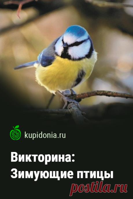 Викторина: Зимующие птицы. Интересный тест о зимующих птицах. Проверьте свои знания!