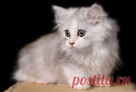 Кошка-такса — Путешествия