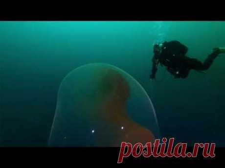 Дайверы обнаружили под водой гигантский пузырь (видео) - Новости Mail.ru