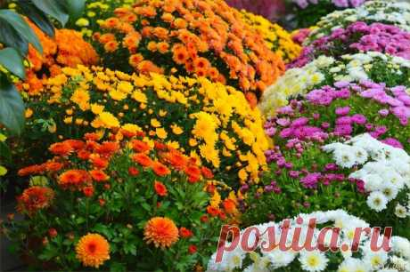 Сколько же цветов прекрасных, ярких!