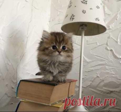 Мимимишная лампа:)