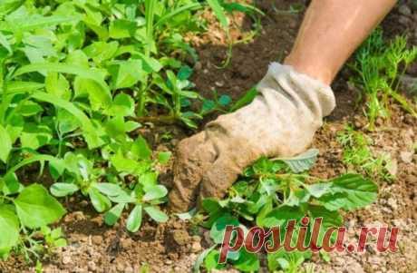 Средство, которое я использую, чтоб убрать траву минимум на 3 года