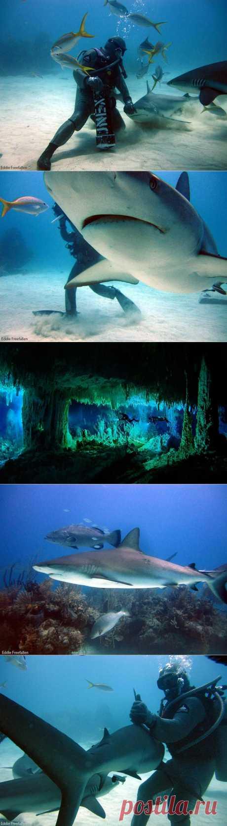» Дайвинг с рифовыми акулами Это интересно!