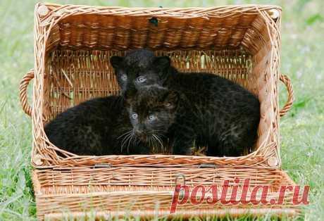 Все кошки своенравны, игривы и обожают коробки! размер тут не имеет значения! Немного про кошек и коробки :) Все кошки любят коробки Никто не знает почему, но тем не менее... Как только кошка видит коробку, в нее обязательно надо залезть :) И размер коробки не имеет значения :)