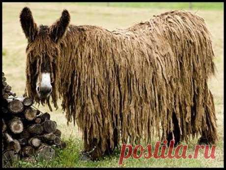 Mon âne, mon âne ... - Dans le pupitre d'Esyram