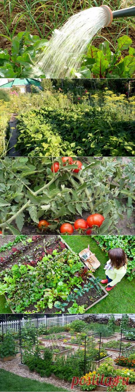 Что мы делаем на огороде неправильно: 10 главных ошибок