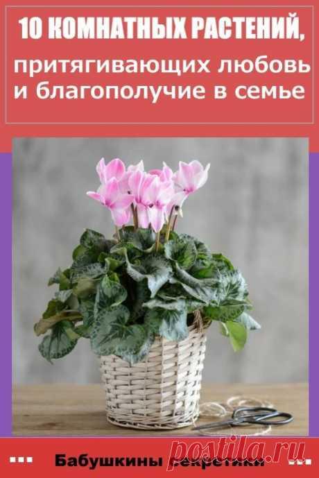 Некоторые комнатные цветы, как многие верят, могут привлечь в ваш дом успех и материальное благополучие.