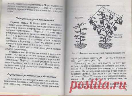 Como criar la cosecha buena de los pimientos
