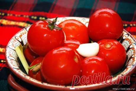 Квашеные помидоры — лучшая закуска