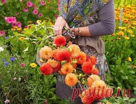 Август на клумбах дачи - сбор семян, пересадка многолетников, видео