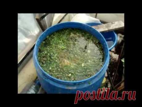 Эффективная настойка для подкормки растений и для лечения почвы в теплице