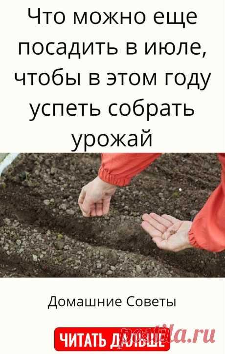 Что можно еще посадить в июле, чтобы в этом году успеть собрать урожай