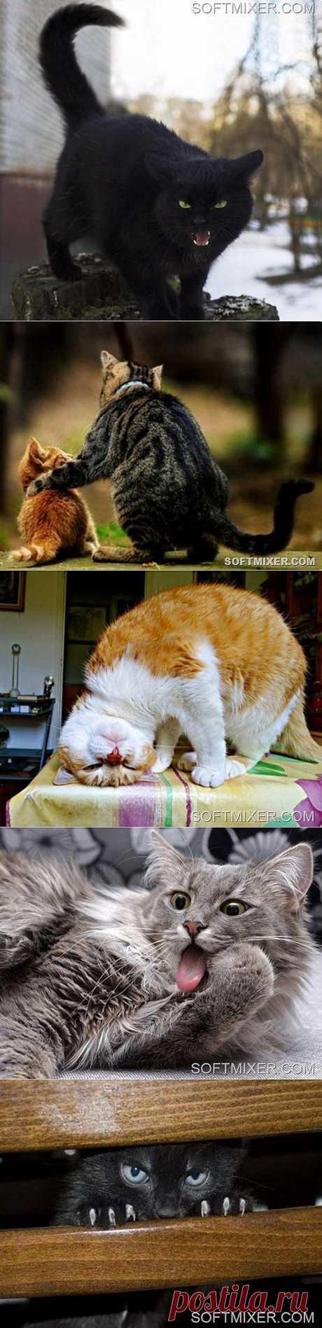 Все, что вы хотели узнать о кошках… | SOFTMIXER