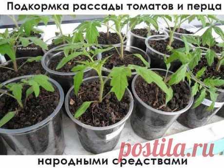 Подкормка помидор и перца – это восполнение недостающих жизненно важных элементов в почве.  Банановая кожура обогащает почву калием и различными микроэлементами. Используется в виде: — настоя (кожура от двух-трех бананов на 3 литра воды настаивать 3 дня), — порошка, которым посыпают землю, — закопанных в лунки шкурок.  Яичная скорлупа используется в виде: — настоя (пол ведра скорлупы на ведро воды, настаивается 3 дня); — при пикировки кладется на дно горшков в качестве дре...