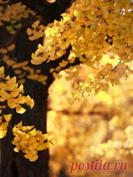 Осень хороша только втом случае, если лето вдуше ещёнезакончилось.  #Ринат_Валиуллин #Где_валяются_поцелуи https://vk.com/club76758532