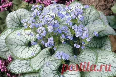 ТОП 30 неприхотливых долгоцветущих многолетников цветов для сада