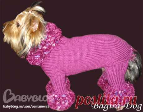 """Вязаная одежда для собак и кошек """"Bagira-Dog"""" - Домашние животные - Babyblog.ru"""