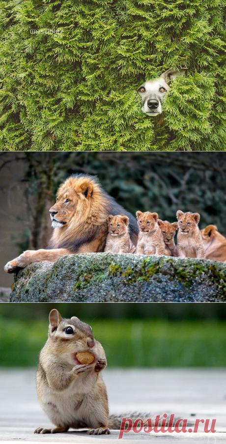 Прекрасные кадры животного мира