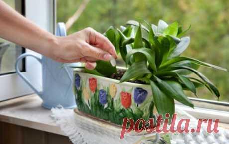 Три простейших трюка для здоровья комнатных растений. Они оживут и зацветут! | Naget.Ru
