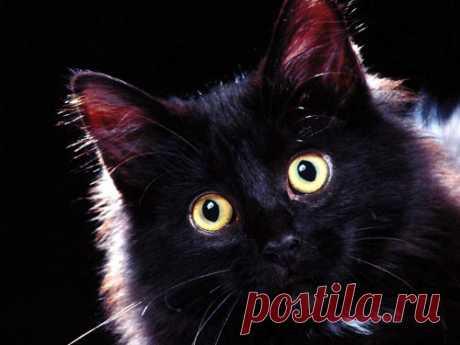 Наталья Воротникова: какую энергетику несет ваша кошка в дом