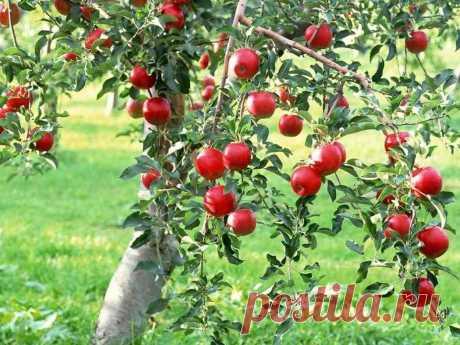 Экономный полив деревьев