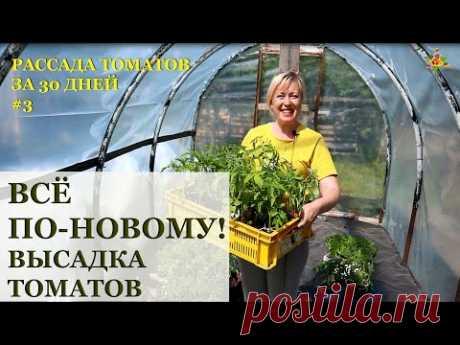 Высаживаю томаты новым способом / Рассада томатов за 30 дней!
