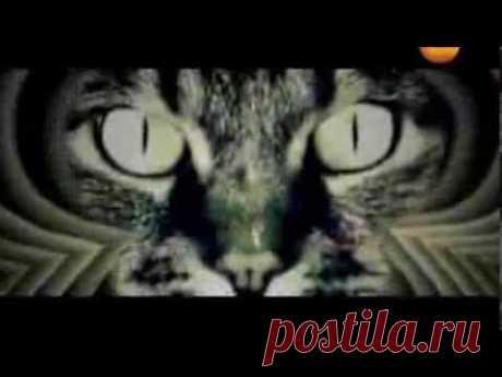 Ваша Кошка - Сверхсущество и управляет Вами