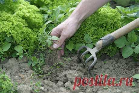 Что нужно делать для того, чтобы на огороде не было сорняков, лучшая методика | Удачные дела | Яндекс Дзен