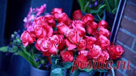 Выращивание роз для продажи| Полезные статьи на блоге Беккер Выращивание роз для продажи | Советы от специалистов по садоводству, цветоводству, уходу за домашними растениями для Вас в интернет-магазине Беккер