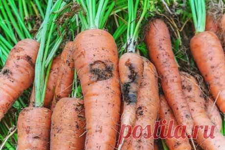 Кто грызёт наши овощи и как с этими вредителями бороться? Фото — Ботаничка.ru