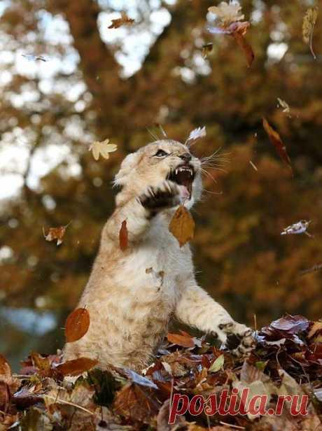 .Осенне-лиственный позитив.