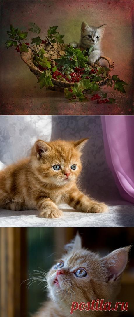 Фотограф Nateletro. Удивительные кошки фото