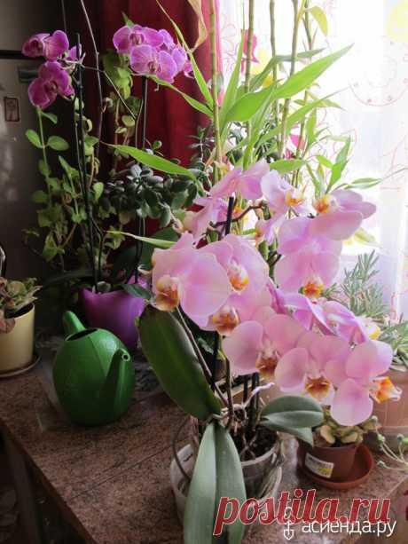 Como domesticar la orquídea.: el grupo las Plantas de salón