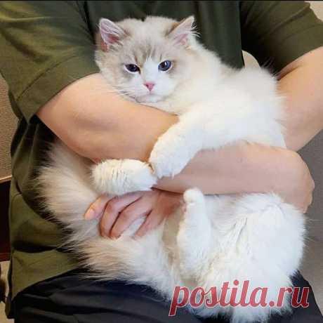 всюду в этом мире тлен и суета окромя конечно толстого кота
