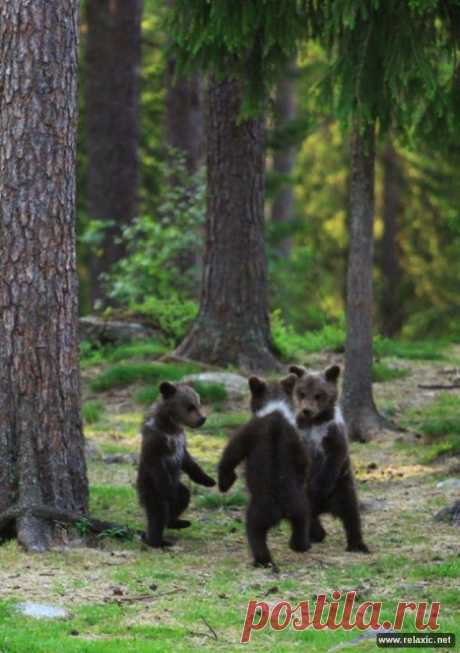 детский, медвежий хоровод...
