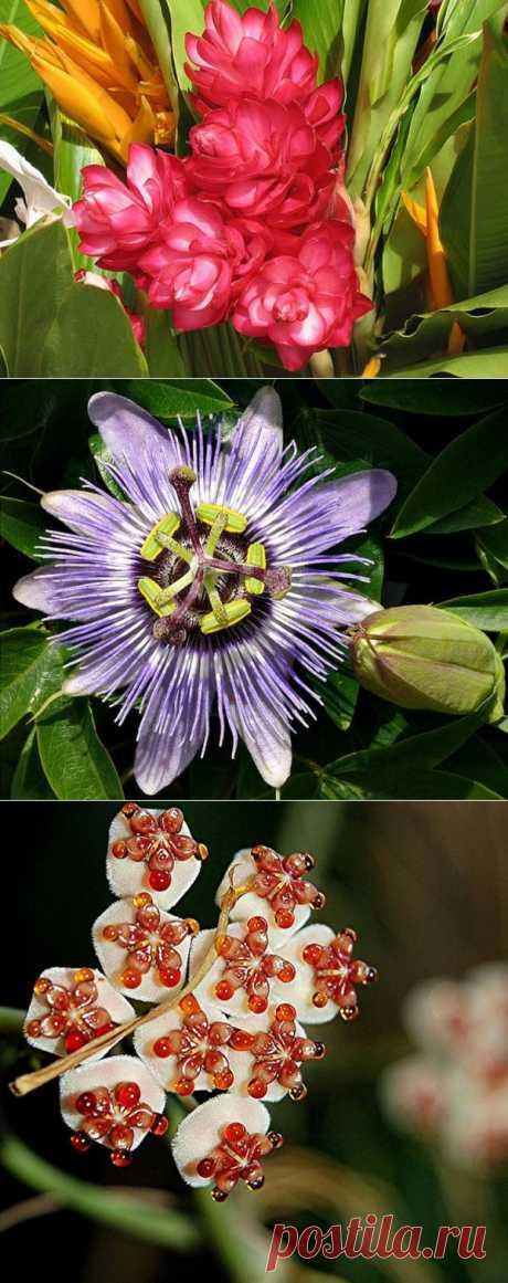 Потрясающие тропические цветы.