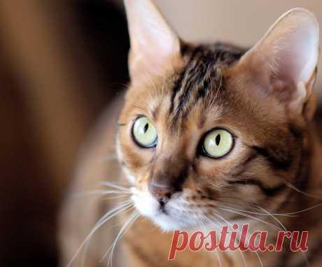 После кота | КОТЫ И ЛЮДИ | Яндекс Дзен