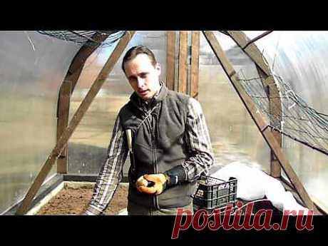 Как увеличить урожай картофеля делением клубня | 6 соток