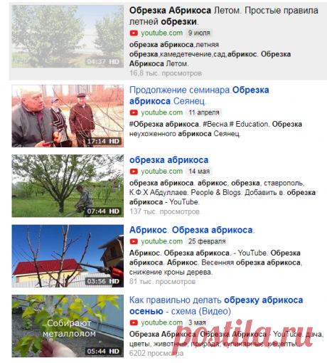Обрезка Абрикоса Летом. Простые правила летней обрезки. — Яндекс.Видео