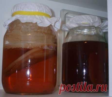 Как сделать чайный гриб в домашних условиях с нуля: рецепт с фото и видео